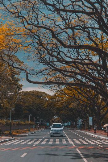 Car on road along trees