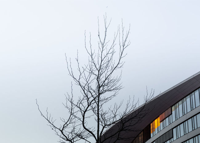 Façade Minimalist Architecture Modern Architecture Winter Architectural Detail Architectural Feature Architecturelovers Bare Tree Beauty In Nature Branch Clear Sky Foggy Low Angle View Minimal Minimalism Minimalobsession Nature No People Outdoors Sky Tree Winter Trees