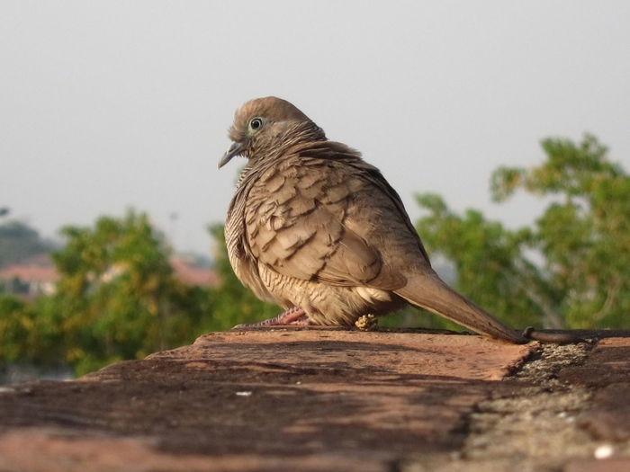 Bird on the