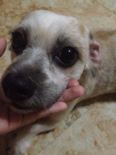 Happy Dutchhound Pet Dog  Hello World