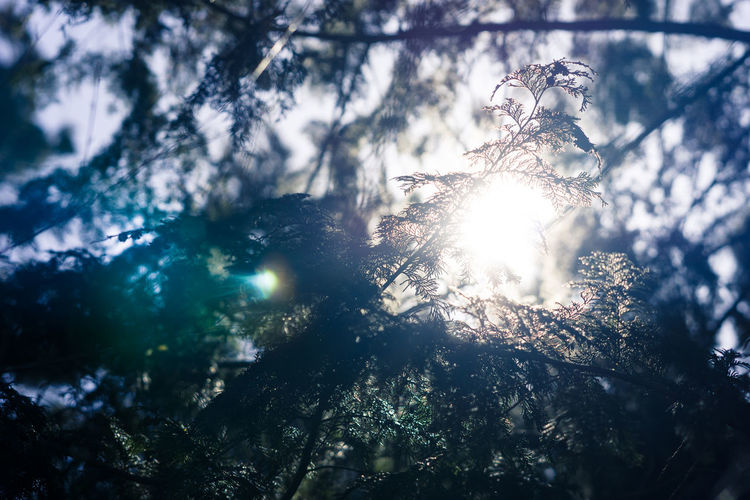 flare Flare Tree Sun Light Morning Nature Flora Leaves Japan Travel Asdgraphy Sony Sony A6000 Sonyimages Sonyphotography Alphauniverse Sonyalpha Tree Forest Outdoors No People Night Nature Freshness Love Yourself The Still Life Photographer - 2018 EyeEm Awards
