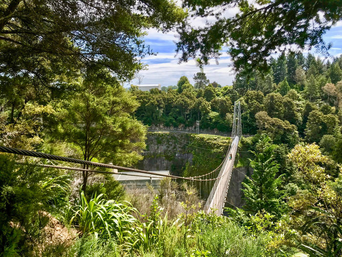Arapuni Swing Bridge Waikato River Day Forest Growth Nature No People Outdoors Suspension Bridge Tree Walking Trail