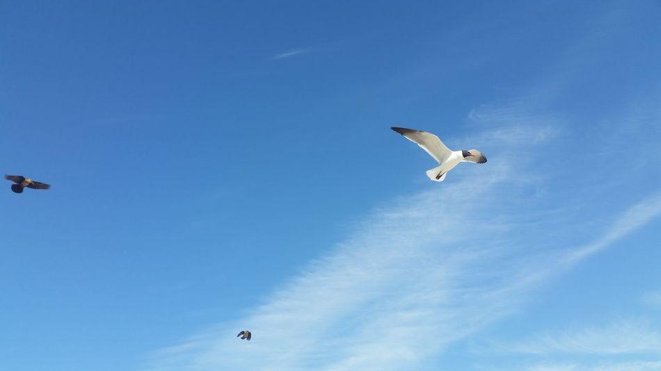 Oki Beach Photography Birds Of EyeEm  Birds In Flight