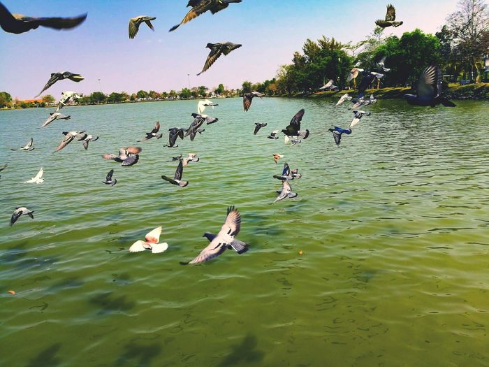 Fly. Water Bird
