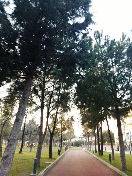 Walk Sport Tree Sky Healthylife