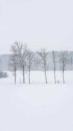 The six winter brothers in their environment! Herrschiller Constantinschiller Brightaesthetic Samsung Galaxy S6 Edge+ Minimalist Samsungphotography 0711 Stuttgart Zollernalb Schwäbischealb