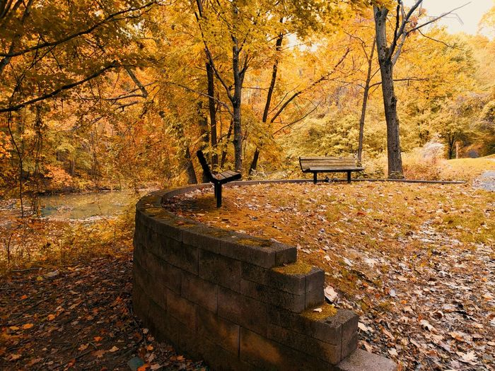 Fall. Tree