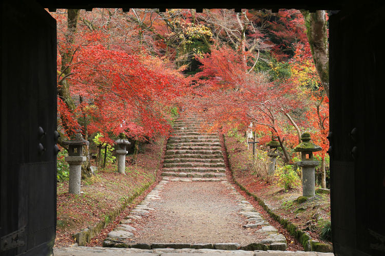landscape fukuoka japan Architecture Autumn Autumn Collection Beauty In Nature Built Structure Change Day Diminishing Perspective Direction Fall Footpath Leaf Nature No People Orange Color Outdoors Plant Plant Part The Way Forward Tranquil Scene Tranquility Tree