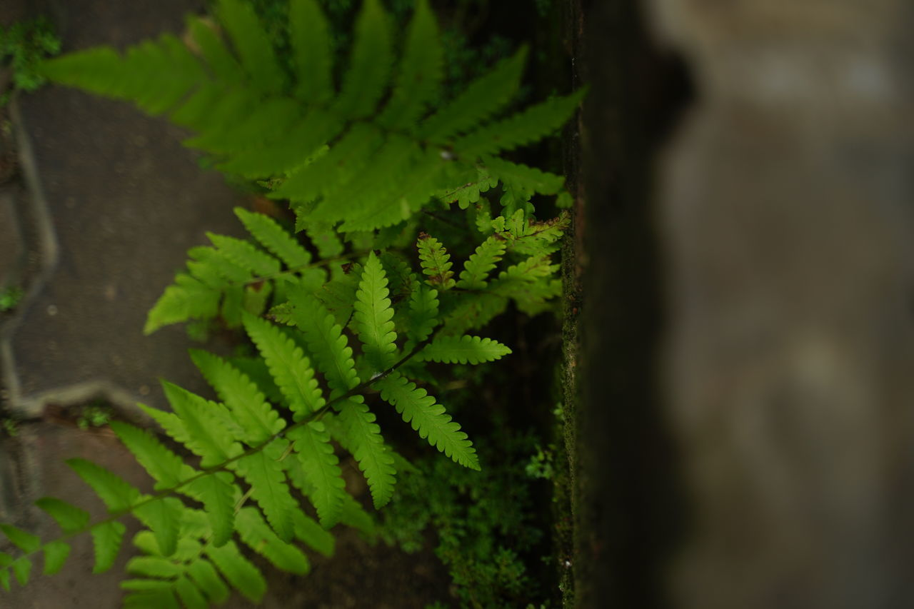 growth, green color, plant, close-up, plant part, leaf, nature, beauty in nature, day, selective focus, no people, fern, focus on foreground, outdoors, vulnerability, fragility, natural pattern, freshness, tranquility, sunlight, spiky