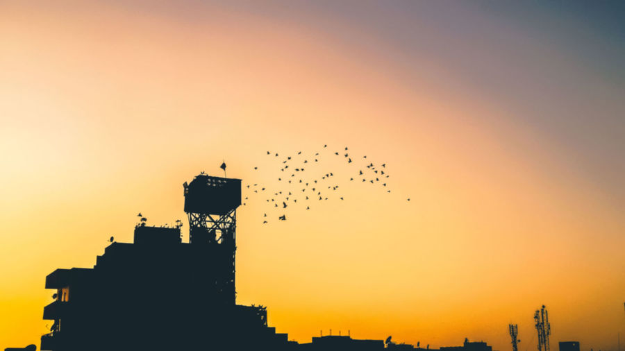 Sunset Sky Stork Bird Of Prey Skyscraper HUAWEI Photo Award: After Dark
