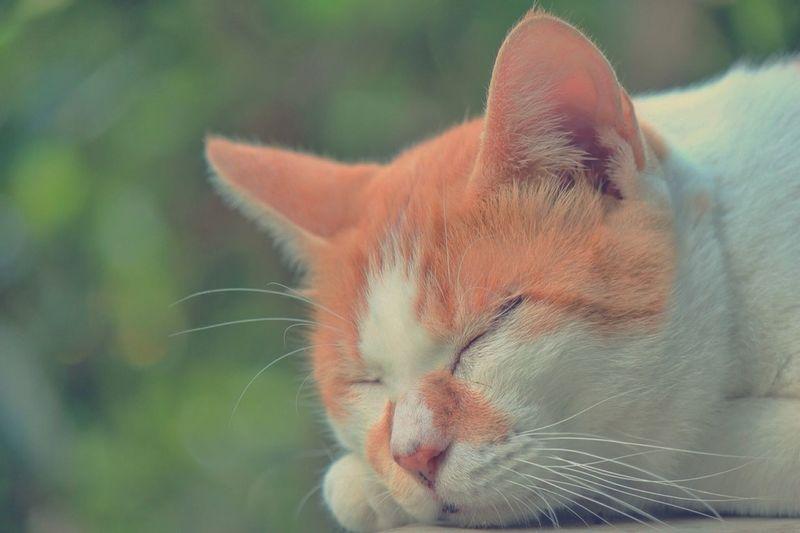 おやすみ Cat Goodnight おやすみ 猫