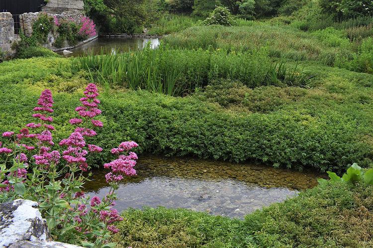 Pink flowering plants by lake in park