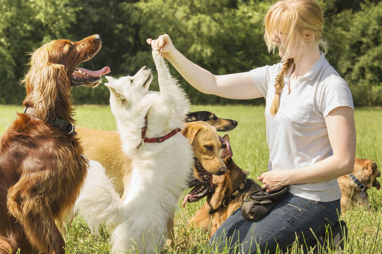 Woman playing with dogs on field
