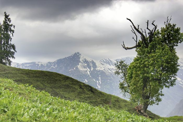 Mountain Nature Tree Cloud - Sky Outdoors Sky Day Beauty In Nature Mountain Range No People Landscape Rural Scene Bird Animals In The Wild Storm Cloud Animal Themes Mix Yourself A Good Time