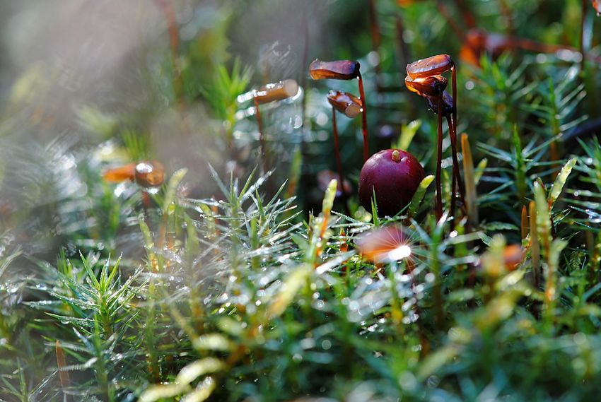 Berry Close-up Day Dreaming Fantasy Forest Forest Plant Forest Plants Growth Macro Nature No People Nostalgia Outdoors Strawberry