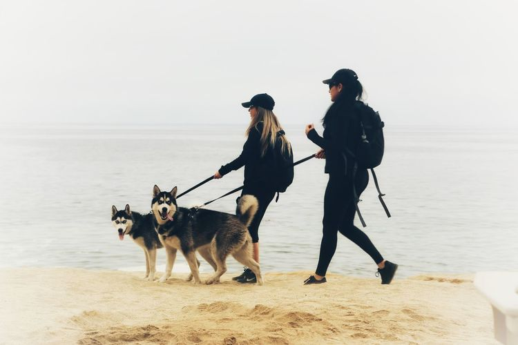 Rear view of dogs on beach