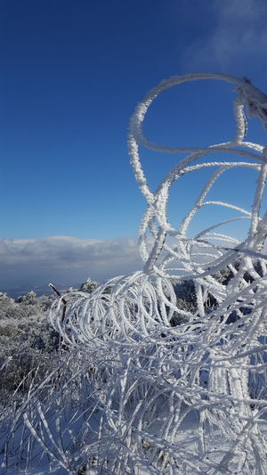 """""""snowy barbed"""