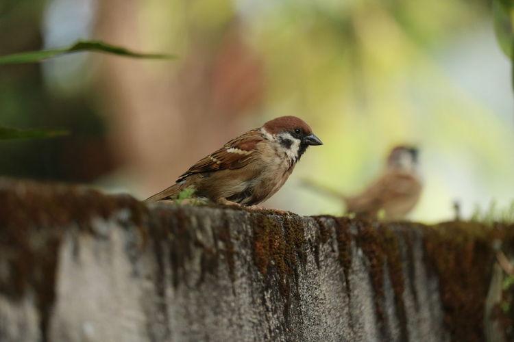 sparrow2 EyeEm