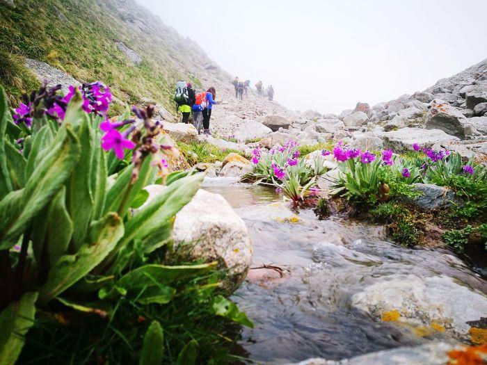EyeEm Selects Flower Flower Head Mountain Young Women Adventure Rural Scene Full Length Hiking Fog Togetherness