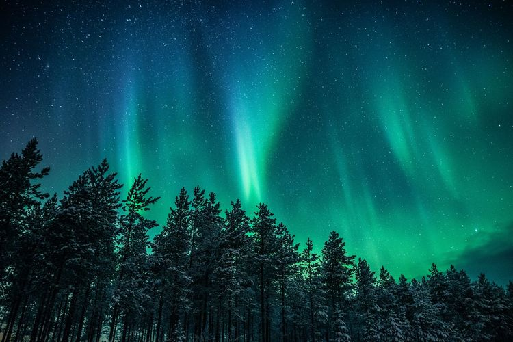 Northern colors Tree Beauty In Nature Scenics - Nature Night Green Color Blue Low Angle View Astronomy Tranquility Sky Tranquil Scene Star - Space Nature Aurora Polaris Forest Northern Lights Landscape Photography Nature Photography Travel Taking Photos Freshness Travel Destinations Enjoying Life Hello World