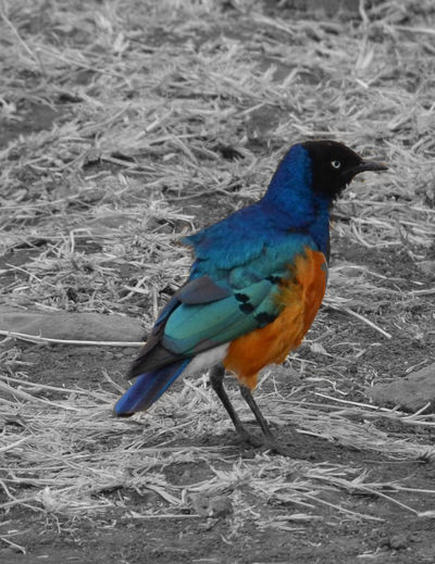 One Animal Bird Animal Themes Animals In The Wild Beauty In Nature Magnificent Starling