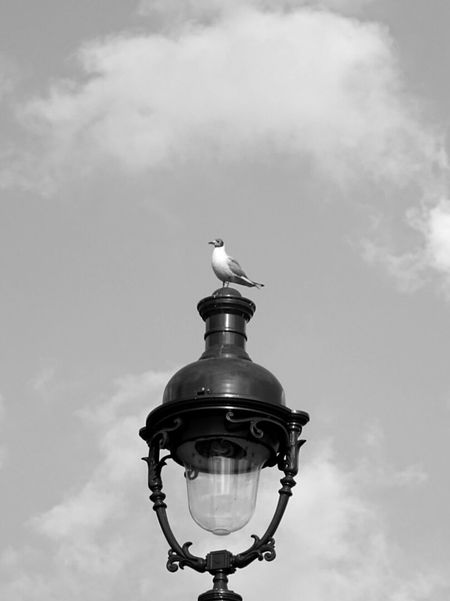 Seen in Paris Photography Paris France Streetphotography France Streets Lamppost Bird Seagull Clouds And Sky Bnw Bnwphotography Forsale Sony HX60 Sony Francetourisme France Photos Urbanphotography Photooftheday Streets Of Paris Paris, France  Paris Photo