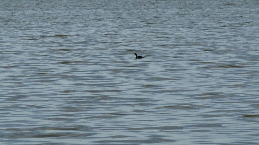 It's okay to be alone Photography Animal Bird Photography Alone Art Amateurphotography Photooftheday Photography Nature Nordsjælland Visitdenmark Danmark Simo119e Photoftheday Waterfront Rippled