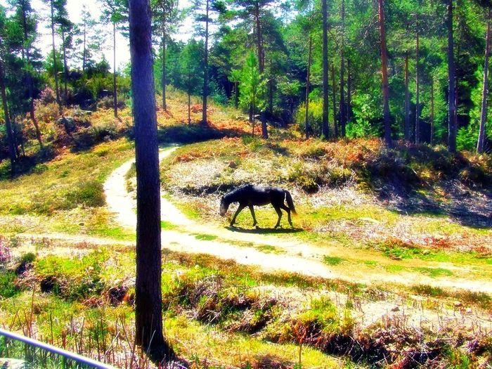 Gerês Portugal Grass Terras De Bouro, Distrito De Braga , Gerês Portugal Wild Horse Race Blue Sky Daylight Plants And Flowers Trees And Sky Wild Nature Portugal.