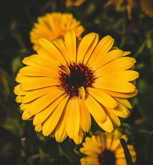 Flower Yellow Petal Fragility Freshness Flower Head Plant Nature Beauty In Nature Growth Day Outdoors No People Focus On Foreground Close-up