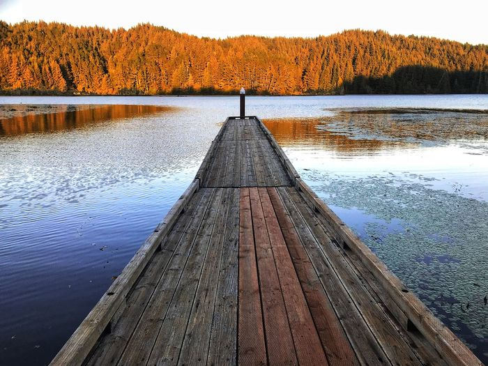 Pier amidst lake against trees