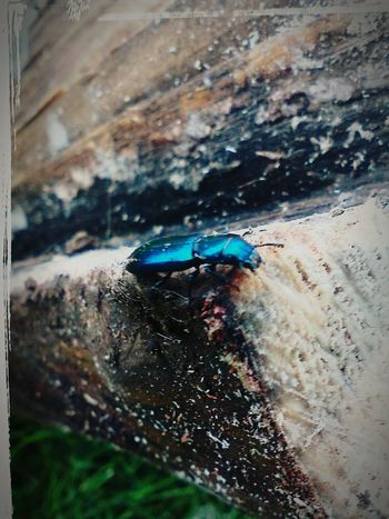 Woody the Wood EaterEntomology Beetle Insects  Close-up Outdoors Wood Beetle Nature Log Wood