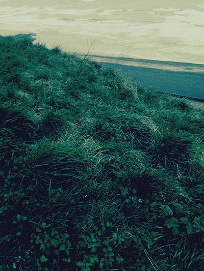 Mint By Motorola Dieppe Cliffs Cliffside Grass Beach Sea Seaside Eyemnaturelover EyeEm Nature Lover