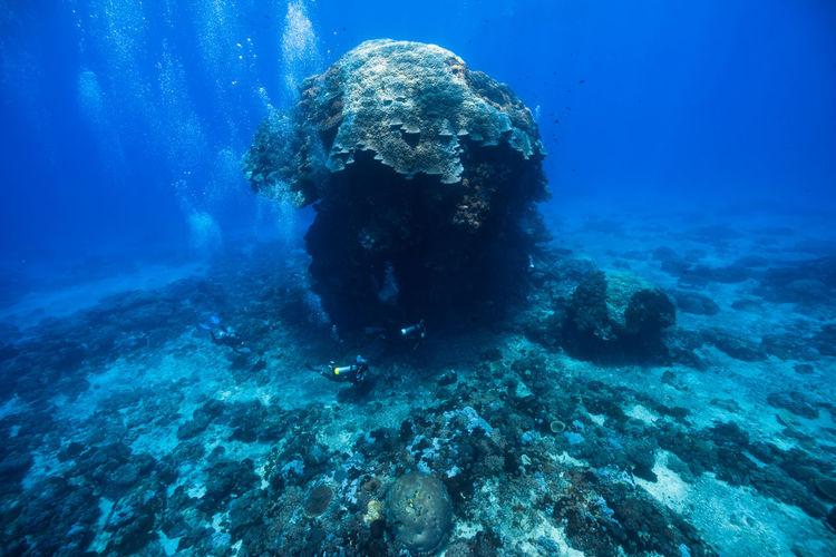 Men Scuba Diving By Rock Formation Undersea