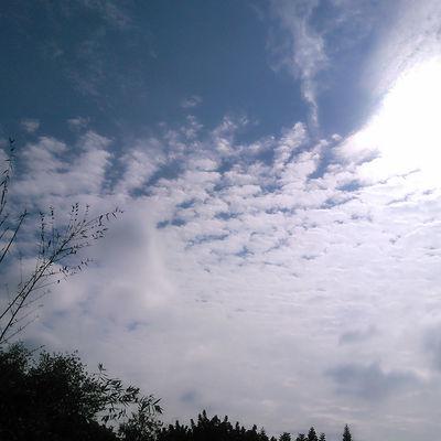 Sunshine ☀ Blue Sky