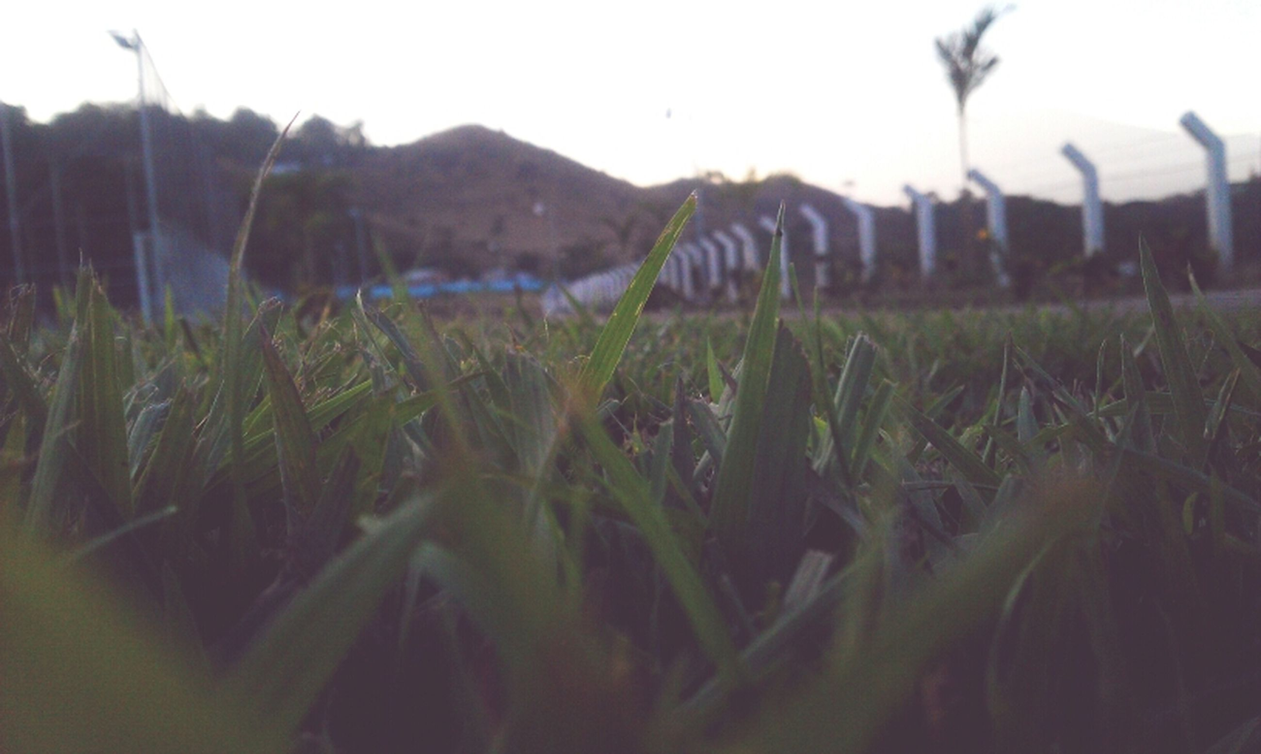 grass, plant, focus on foreground, field, growth, selective focus, nature, clear sky, tranquility, beauty in nature, green color, landscape, tranquil scene, close-up, grassy, growing, outdoors, mountain, day, sky