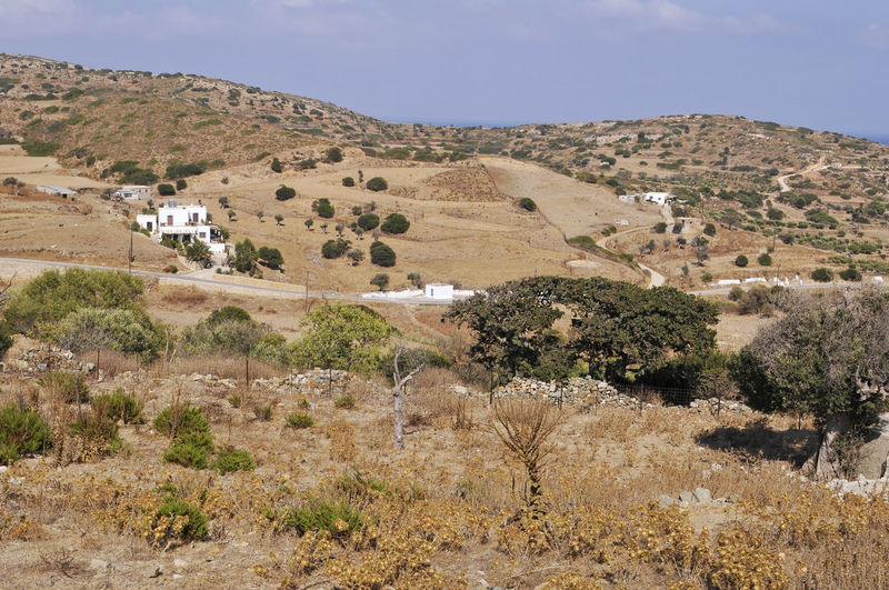 rural landscape, Lipsi island, Greece Dodecanese Farmland Lipsi Island Mediterranean  Rural Beauty In Nature Bush Field Grass Greece Island Land Landscape Lipsi No People Non-urban Scene Outdoors Scenics - Nature Semi-arid Tranquil Scene Tranquility Travel Destinations Tree