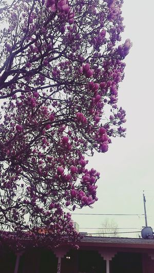 Beautiful Nature Pink Leaves Editoftheday EyeEm Best Edits