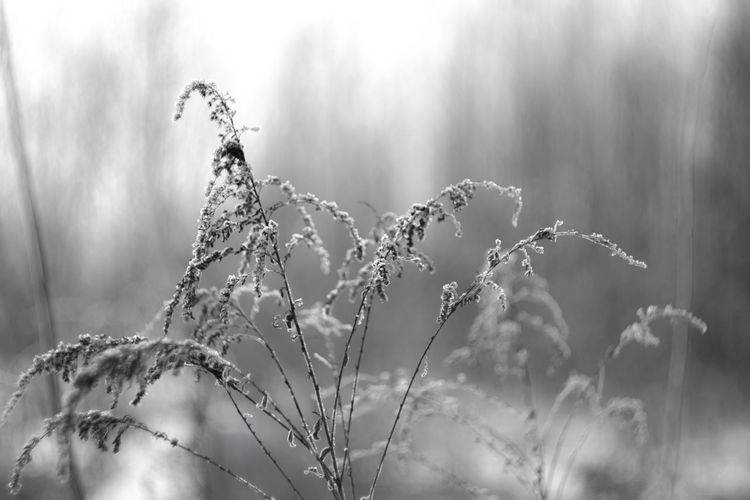 Beauty In Nature Close-up Cold Temperature Day Focus On Foreground Freshness From My Point Of View Growth Nature No People Outdoors Plant Tranquility Tree Wasiak Wilted Plant