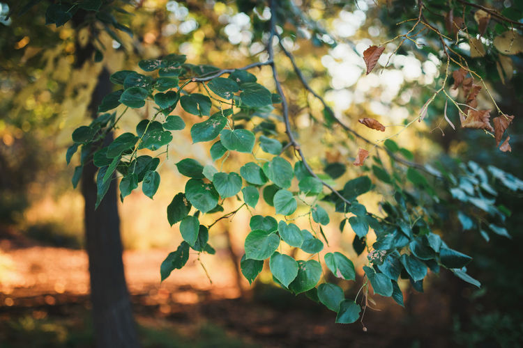 Autumn Autumn Colors Autumn Leaves Background Beauty In Nature Branch Branches Close-up Copyspace Day Fall Fragility Freshness Grow Growth Growth Horizontal Leaf Light And Shadow Love Nature No People Outdoors Plant Tree