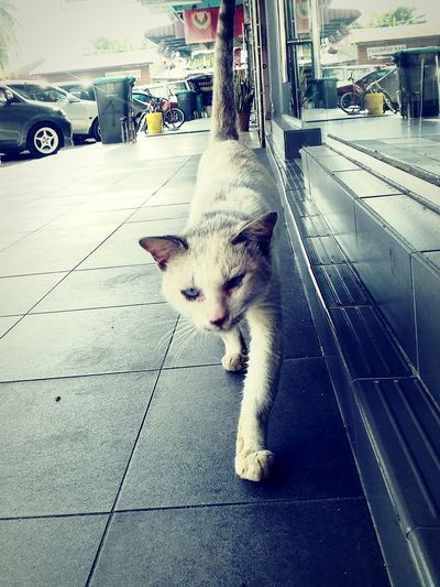 Cat Streetphotography Animal