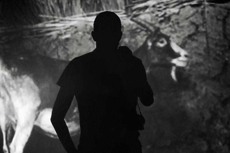 Rear view silhouette of man standing against goat at farm