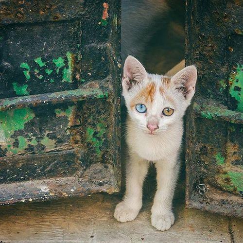 The mixed bag that was 2015  Shot with Nikon D7000 Kittensofinstagram Kitten Redmi2Prime Redmi Redmiclicks CatsOfKolkata Kolkata _soi India Indiaclicks Indiapictures Catseye Catsofinstagram Peekaboo