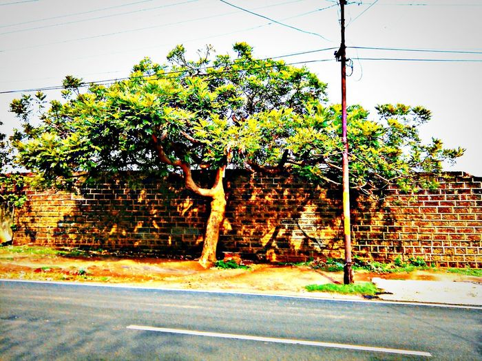 Road side attraction Tree Trees Tree_collection  Roadside Attractions Roadside Roadside Tree Roadsideattraction RoadsideView Roadsidephotography Roadside Shots India Indian Indiapictures India_clicks Indiaclicks Indianphotography ... Picsart Hdr Edit Mobilephotography Mobile Photography Picsart Edit Picsartofficial Picsartapp Around Me Nearby