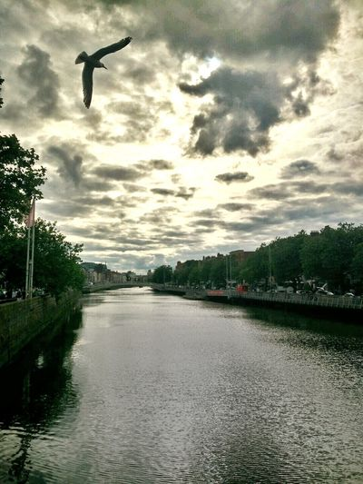 Tree Reflection Sky Water Nature Cloud - Sky Lake Outdoors City No People Animal Themes Scenics Day Horizontal Astrology Sign Natural Phenomenon Tranquility Reflection Motion Point Of View In Front Of Illuminated Bridgeview Bridge Of Sighs Dublin City