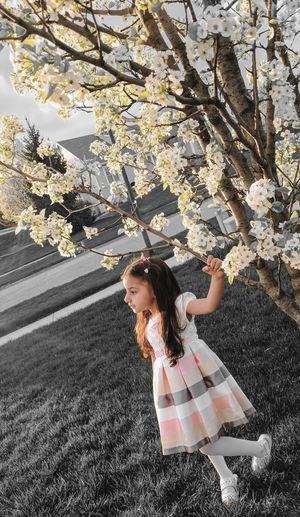 Full Length Of Girl Standing By Cherry Tree