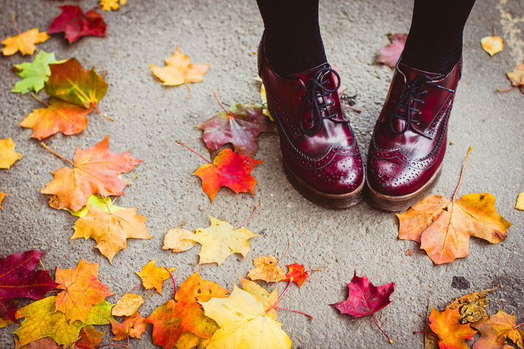 Low Section Shoe Human Body Part Human Leg Autumn Body Part One Person Plant Part Change Leaf Standing Day Lifestyles High Angle View Orange Color Footpath Leaves Real People Outdoors Nature Maple Leaf Human Foot Human Limb Messy Leather