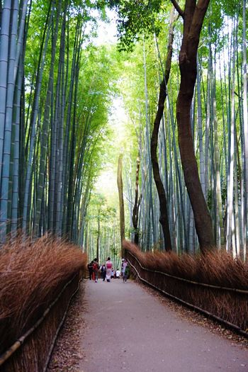 Japan Arashiyama 京都 Kyoto Eye4photography  嵐山 EyeEm Best Shots 嵯峨野 竹林