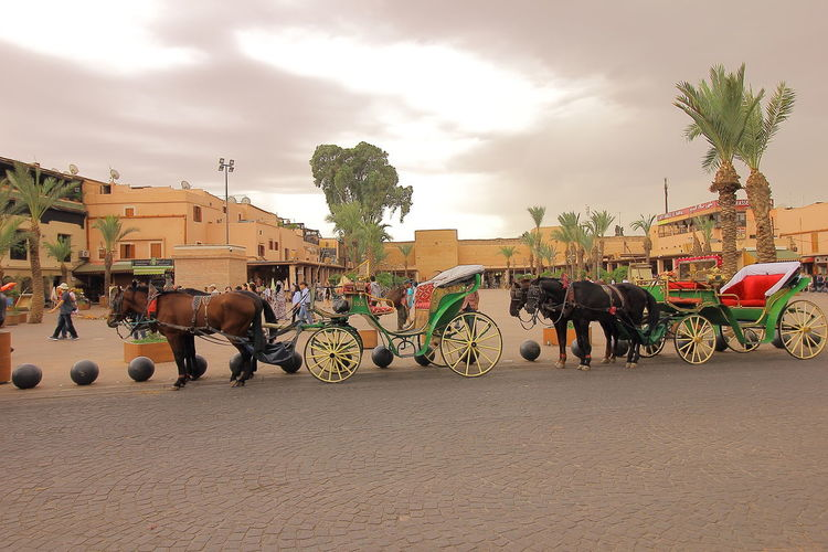 Horse drawn carriage called Caleche in Medina of Marrakesh, Morocco. Marrakesh❤ Travel Caleche Horse Calèche Horse Drawn Carriage Horsedrawn Marrakech, Morocco Medina Marrakech Mode Of Transport Tourism Travel Destinations