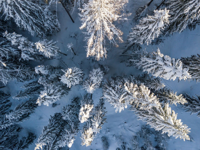 Aerial view of frozen trees during winter