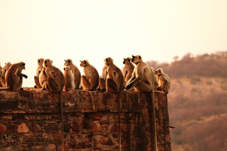 Close-up of monkeys sitting on stone wall